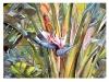 Strelitzia Nicolai. Acuarela y tinta china. 50 x 40 cm.
