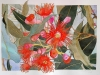 Eucaliptus  2017. Acuarela y tinta china