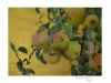 Pears from Lleida 2009, watercolour