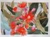 Eucalyptus 2017. Aquarelle et encre