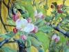 Fleurs de pommier 2015. Aquarelle