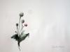Poppy button. Watercolour. 2008 Fuenso