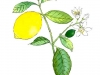 Limon 2005