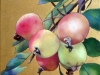 Manzanas Silvestres 2015. Óleo sobre tela 30x 30 cms